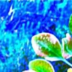 cropped-DSCN4682.jpg
